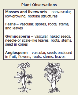 High school biology 2008 released test a student observed different types of plants and recorded the data shown based on the drawings and information in the chart these plants are most likely ccuart Gallery