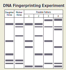 dna fingerprinting worksheet high school dna best free printable worksheets. Black Bedroom Furniture Sets. Home Design Ideas