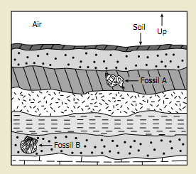 comparing moth and cave In the cool and constant climate of these alpine caves they enter a dormant state   the comparison of relative volumes between the neuropils of the two moth.