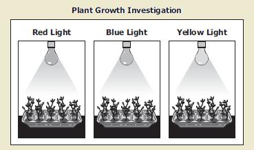 What Factors Affect Plant Growth?