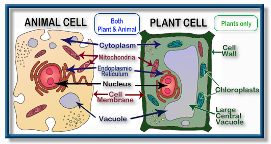 SOL LS.2 Cell Structure