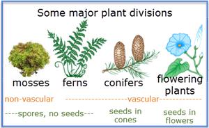 Plant phyla | bioninja.